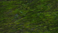 Natural clear fluent water aquatic plant Stock Footage