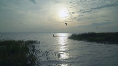 Kitesurfers flying and freeride on water Stock Footage