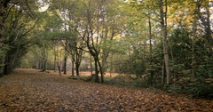 Autumnal English forest and footpath, panning video Stock Footage