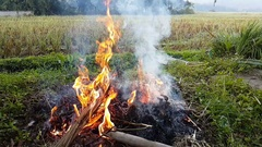 Campfire camp fire summer burning fire near the rice field Stock Footage