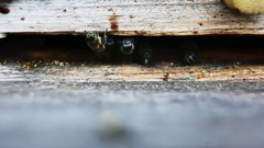 Bee flies into the hive Stock Footage