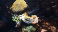 Fish and coral. Wild life animal. Stock Footage
