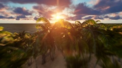 Aerial flight through palm trees to reveal Summer island shape Stock Footage