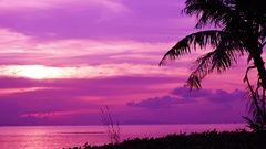Silhouette of palm trees at purple sunset Stock Footage