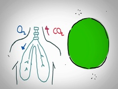 Lungs - Hand Drawn - Caucasian Hand - green screen Stock Footage