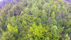 Flying over trees and pond in forest Stock Footage