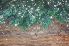 Christmas fresh evergreen tree branches Stock Photos