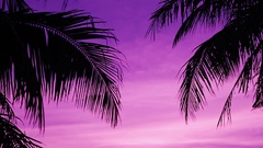 Silhouette of palm trees at sunset Stock Footage
