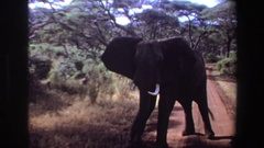 1969: elephant standing on dirt track road ANGOLA Stock Footage
