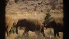 1969: herd of elephants standing on the plains covered in dead grass Stock Footage