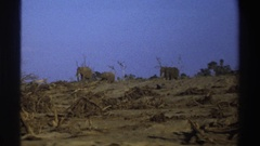 1969: elephants walk on top of ridge in one direction among dried trees, bushes Stock Footage