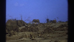 1969: family of elephants pasting SOUTH AFRICA Stock Footage