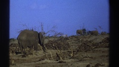 1969: a group of elephants in a dry desert environment SOUTH AFRICA Stock Footage