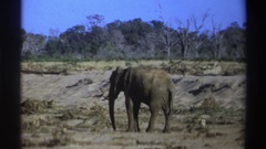 1969: elephant standing in dry lake bed SOUTH AFRICA Stock Footage