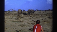 1969: person watching elephants in an arid environment SOUTH AFRICA Stock Footage