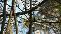 Tits On Branch In Winter Forest Stock Footage