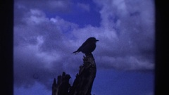 1969: bird on object, looking at its surroundings NIGERIA Stock Footage