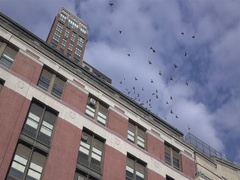 Birds flying from top of building slow motion Stock Footage
