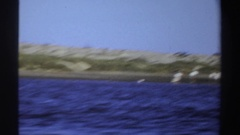 1969: vantage point from boat on water and viewing birds lining the shore SUDAN Stock Footage