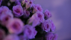 A large bouquet of pale pink roses with green buds and leaves, close-up Stock Footage
