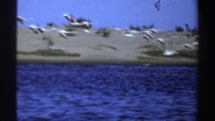 1969: flamingoes flying away from the body of water SUDAN Stock Footage