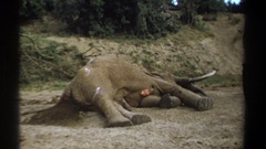1969: a elephant died due to bad health condition KENYA Stock Footage