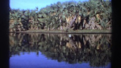 1969: a bird drinking water from the lake. SUDAN Stock Footage
