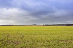 Wheat crop and dramatic sky Stock Photos