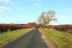 IMG 0081 Country road with Ash tree in autumn Stock Photos