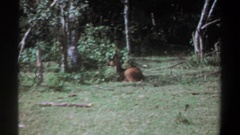 1969: colt sitting in a clearing at the edge of a forest KENYA Stock Footage