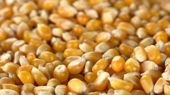 Dried Corn (rotating; not loopanle; 4K) Stock Footage