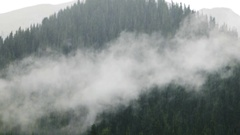 Rain and cloud on the background of Tien Shan spruces. Issyk Kul, Kyrgyzstan Stock Footage