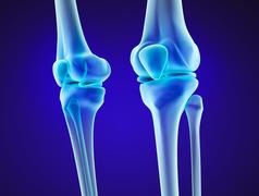 Knee anatomy. Xray view. Medically accurate 3D illustration Stock Illustration