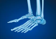 Human skeleton: skeletal foot. Medically accurate 3D illustration Piirros