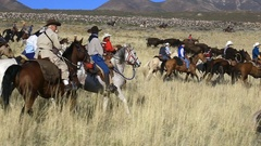 Cowboys riding horses through field during round up event Stock Footage