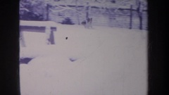 1968: a dog running around in the deep snow. MICHIGAN Stock Footage