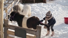 Little Girl Brushing Tail of Pony Stock Footage
