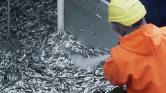Fisherman Rinses Caugth Fish on Board of Commercial Fishing Ship Stock Footage