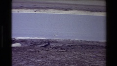 1980: the gull's chilly outlook. WESTERN USA Stock Footage