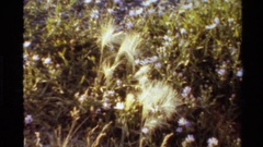 1980: a bunch of feather flowers. WESTERN USA Stock Footage
