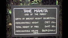 1981: sign: tane mahuta, god of the forest interpretive sign for tree height, Stock Footage