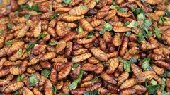 Edible roasted and spiced meal worms, Bugs fried on street food in Thailand Stock Footage