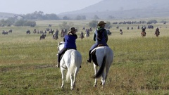 Cowboys on horses getting ready for a round up event Stock Footage