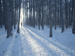 Snow falls from the trees on the silhouette of a man illuminated by sunset Stock Footage