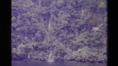 1982: humans cannot be surveying forest NEW ZEALAND Stock Footage