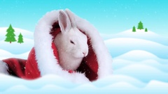 Funny bunny washing his face in the Santa Claus hat Stock Footage