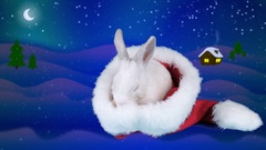 Christmas funny little rabbit washing up in the Santa Claus hat Stock Footage