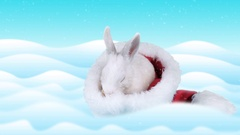 Little white rabbit washing up in the Santa Claus hat Stock Footage