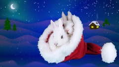 Two Christmas fluffy rabbits eating arugula salad in the Santa Claus hat Stock Footage