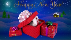 Happy New Year greeting card with text, funny rabbit opening present box Stock Footage